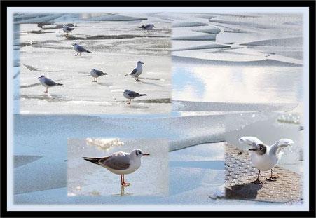 Eiszeit auf dem Mittellandkanal und viele Möwen