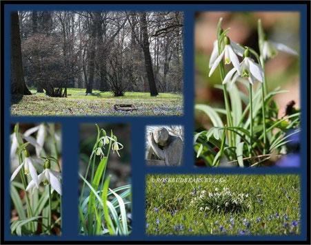Hannover Linden Bergfriedhof Scilla Schneeglöckchen