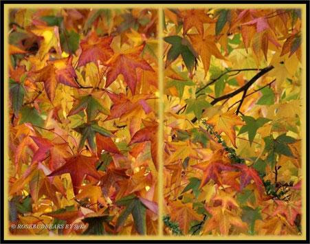 Amberbaumblätter