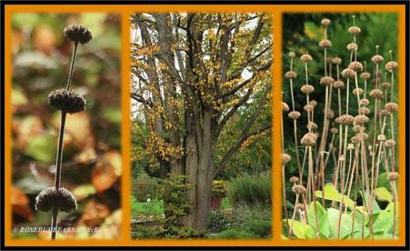 und noch mehr Herbst in Hannovers Stadtpark
