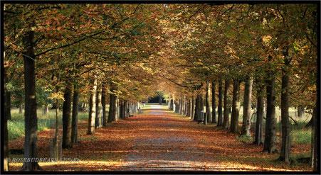 Hannover Tiergarten Spazierweg