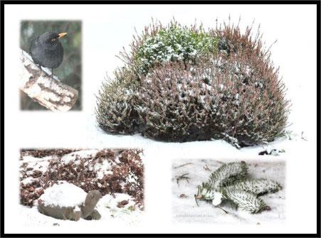 der erste Schnee des Jahres 2016