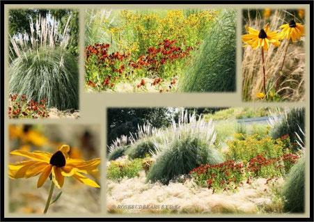 Gräser und Sonnenblüten im Berggarten