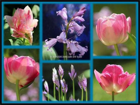 Tulpen Hasenglöckchen
