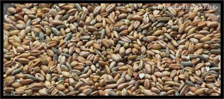 Sechs Körner Getreide