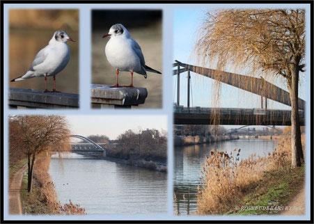 einige Brücken über den Mittellandkanal an Hannovers Bothfelder Bogen und deren Bewohnende (männlich? weiblich? diverse?)