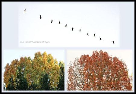 Herbstbaum Stieleiche