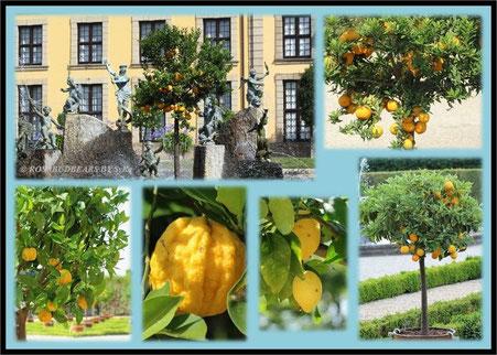 Hannover Herrenhausen Großer Garten Orangenparterre