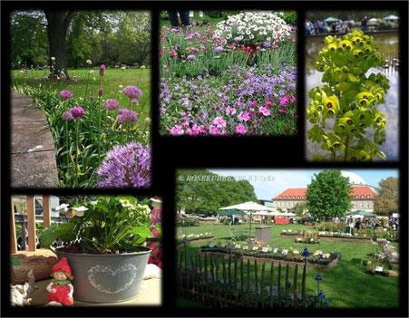 19. Hannoversche Pflanzentage im Stadtpark