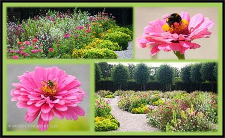 Hannover Herrenhausen Großer Garten Fürstlicher Blumengarten Zinnien