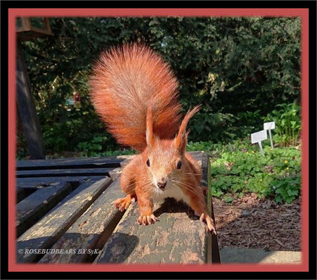 Eichhörnchen im Berggarten