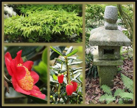 Hannover Stadtpark japanischer Garten