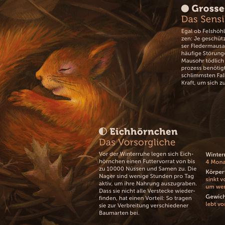 Ausschnitt der Illustration mit dem Eichhörnchen in der Winterruhe © Michael Stünzi