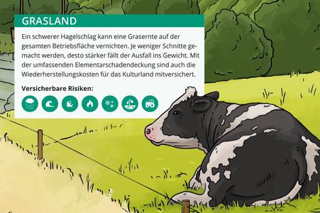 Grasland mit Kuh © Michael Stünzi