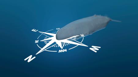 Unterwasserlärm, wie orientiert sich ein Pottwal (Ausschnitt aus dem Film) © Michael Stünzi