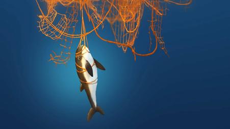 Fische und Wale verfangen sich in herumtreibenden Netzen, Geisternetzen © Michael Stünzi
