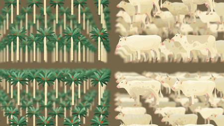 Gigantische Monokulturen (Palmöl) oder Weideland für die Fleischproduktion © Michael Stünzi