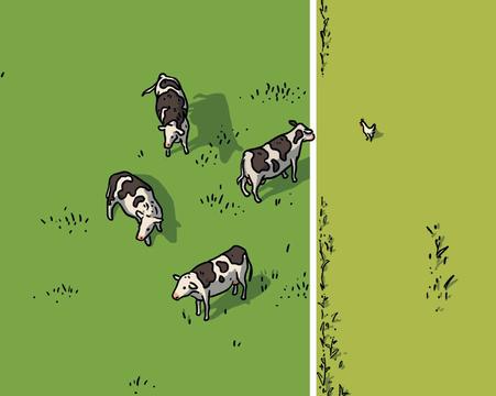 Milchkühe auf Weide und Huhn im Maisfeld (Ausschnitt) © Michael Stünzi
