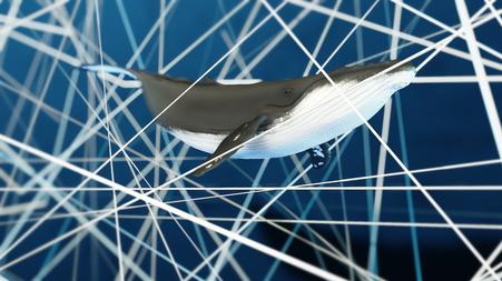 Unterwasserlärm, Underwater Noise,  ein Buckelwal im Lärm (Ausschnitt aus dem Film) © Michael Stünzi