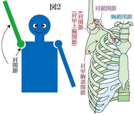 肩関節複合体の動き