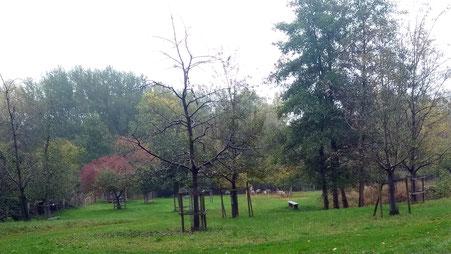 Die Streuobstwiese im Herbst 2019, Blick vom Unterstand auf die Wiese