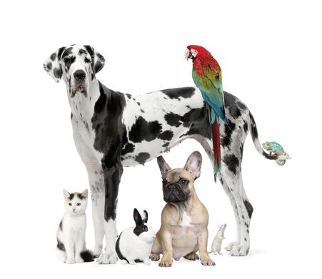 Dog Training Agression Behaviouralist
