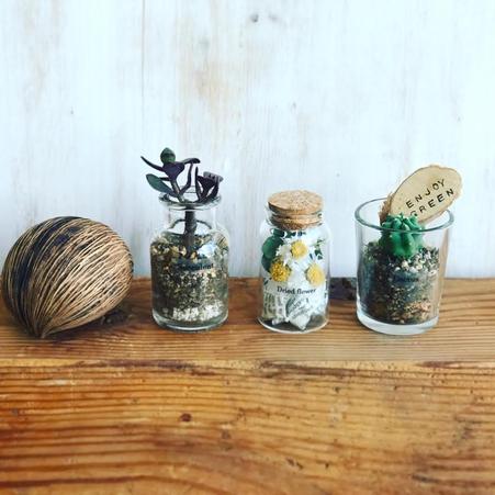 4月ワークショップ「3種類の植物を使ったミニテラリウム」@ カフェ&ブックスビブリオテークさま