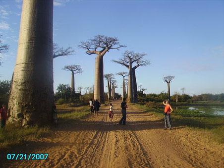 Allée des Baobab Morondava
