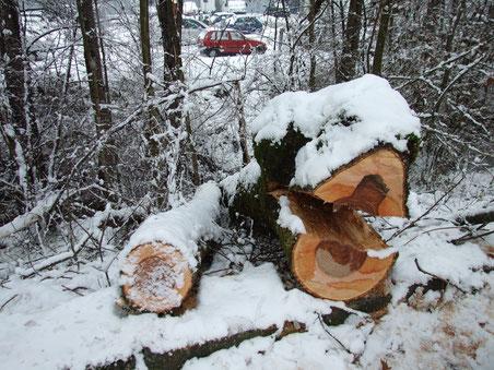 Keine Überlebenschance bei einem Volltreffer: Dieser Baum begrub mehrere Autos unter sich.