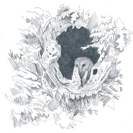 Effraie des clochers dans une cavité d'arbre (Ille-et-Vilaine, juillet 2015)