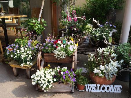 エントランスでは、きれいに咲きほこった花たちがお客様を出迎えます。