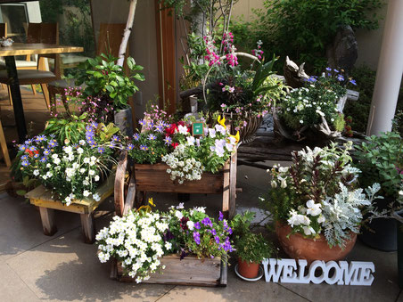 エントランスでは、きれいに咲きほこった花たちがお客様を出迎えます
