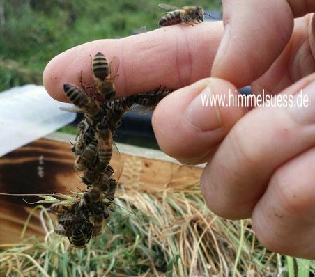 Lehrbienenstand Imkerei himmelsüß