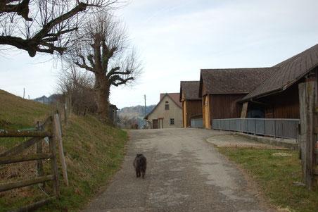 der Wanderweg führt mitten durch den Bauernhof