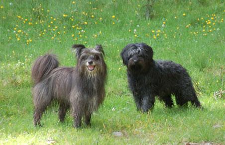 21.8.14 Lady und Mayra in Bernau