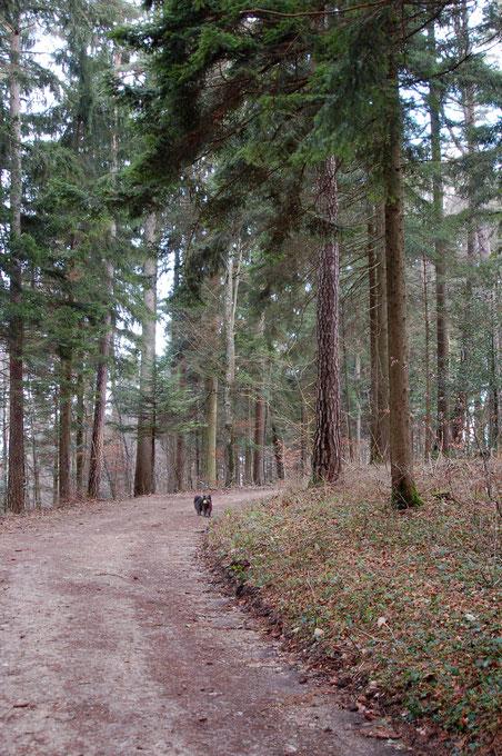 Start Waldweg bei der Skylla Hütte (wahlweise Teerstrasse)