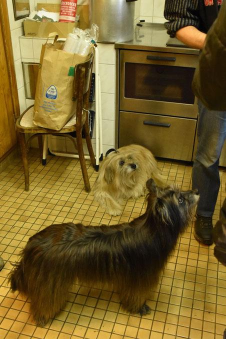 die in der Küche grandiose im-Weg-Steherin Lady und der brave Merlo, der aus dem Weg lag...