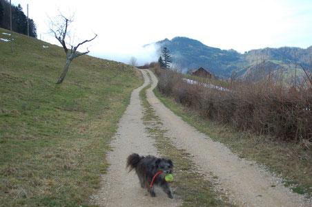 Weg nach dem Bauernhof - es geht stets bergauf