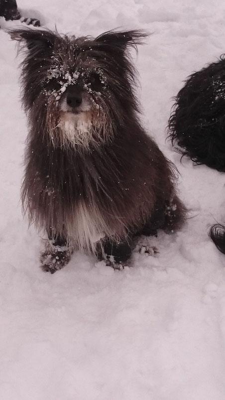 17.1.16 Schneespazi Skylla Hütte mit Mayra und Akira
