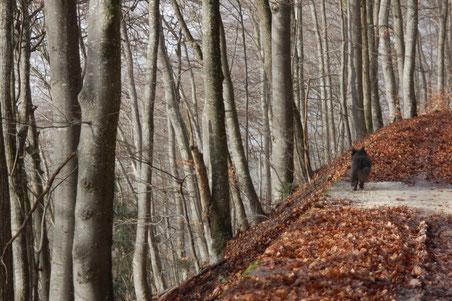 da fällt der Wald links steil ab, rechts ist eine hohe Felswand