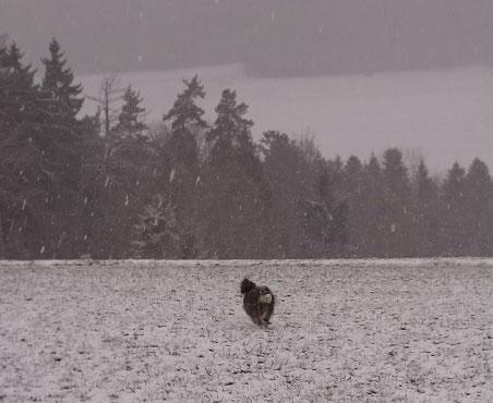 so schnell kann das Wetter ändern: Schneetreiben bei der Skylla Hütte
