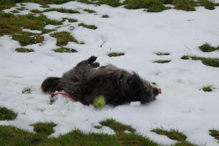 sie will gar nicht mehr aufhören mit wälzen und Schnee lecken