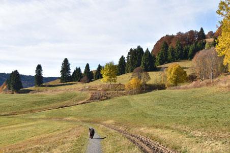 goldener Herbst - Tagesausflug nach Bernau 31.10.16