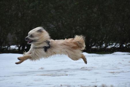Brix ist ein Neffe von Lady und kann auch toll rennen