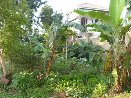 der Garten meiner Gastfamilie