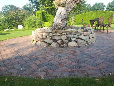 Bau einer neuen Einfassung als Trockensteinmauer inkl. Steingewächsen.