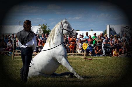 Ecurie de spectacle equestre
