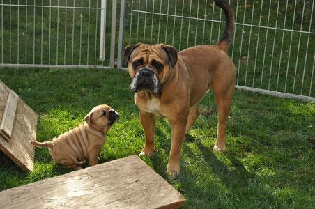 Oscar mit seiner Halbschwester Rosi