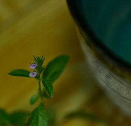 コケ玉から生えた草に咲く花