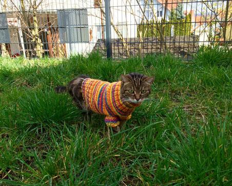 Bild: Katze Ronja mit Pullover im Freigehege